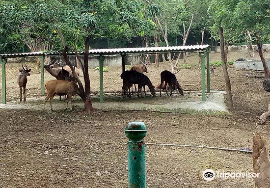 Pradyuman Park1