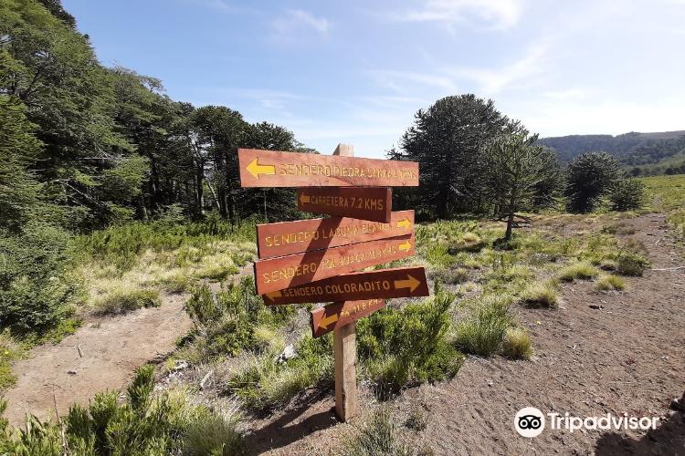 Reserva Nacional Malalcahuello4