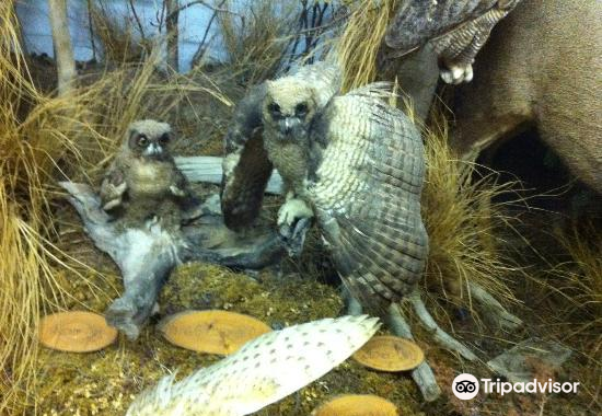 The Den - Jasper's Wildlife Museum3