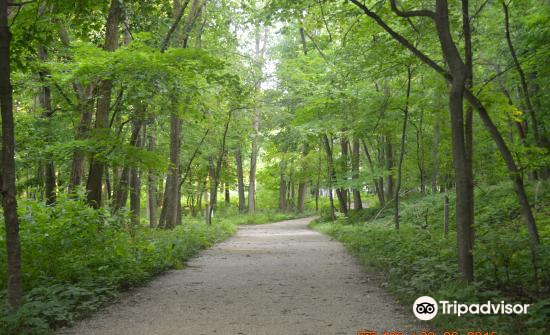 Forest Park2