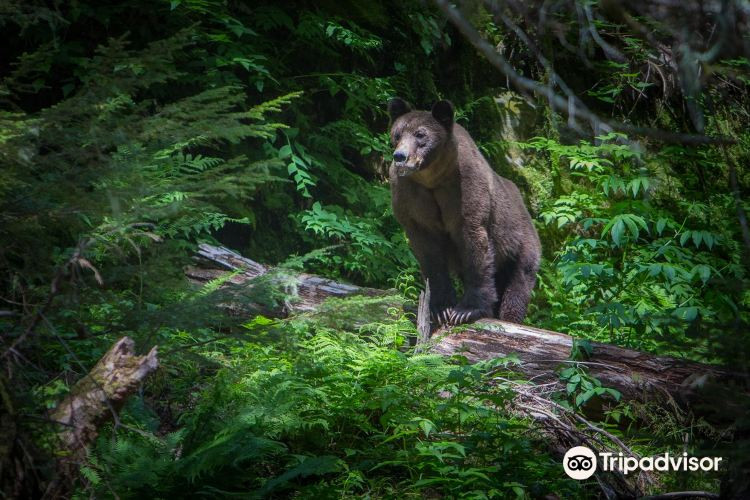 Grizzly Bear Refuge3