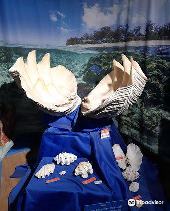 Magical World of Shells Museum3