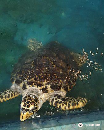 Our Turtle Conservation Project4