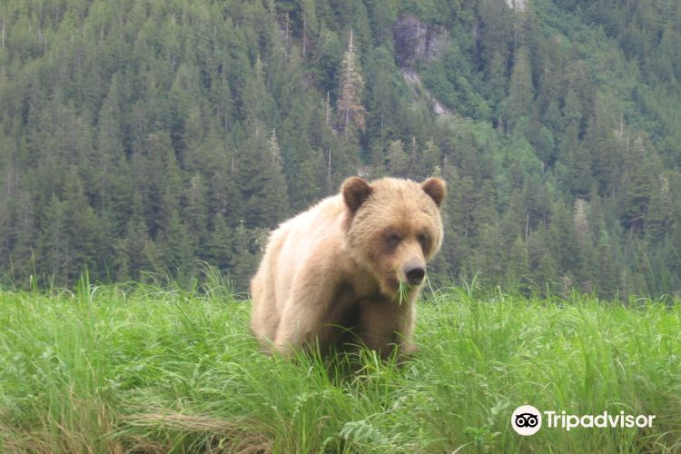 Grizzly Bear Refuge4