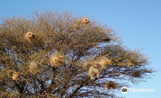 Mafikeng Game Reserve2