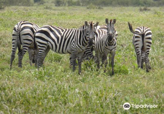 Nechisar National Park3