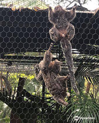 Monkey Park1