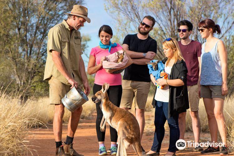 The Kangaroo Sanctuary2