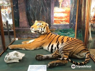 University of Aberdeen Zoology Museum