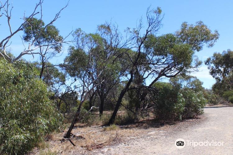 Aldinga Scrub Conservation Park4