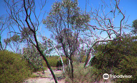 Aldinga Scrub Conservation Park1