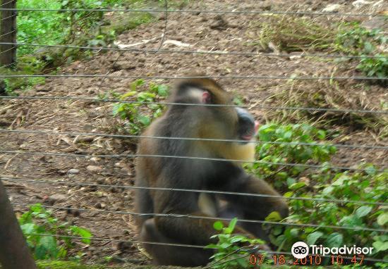Limbe Wildlife Centre4