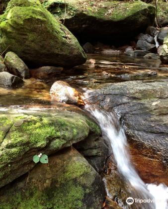Tranh Stream3