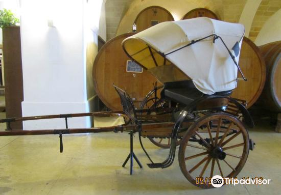 Cantina Albea winery and museum2