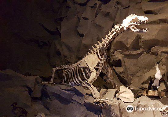 Museo de la ballena2
