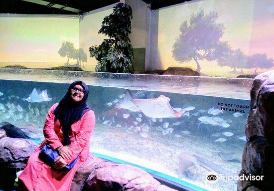 Jakarta Aquarium4