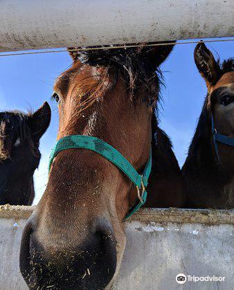 Banei Horse Ranch Tokachi1
