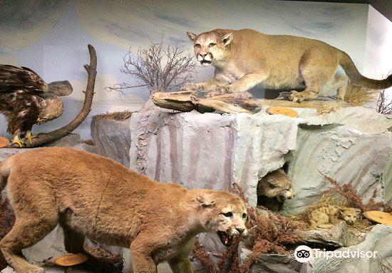 The Den - Jasper's Wildlife Museum2
