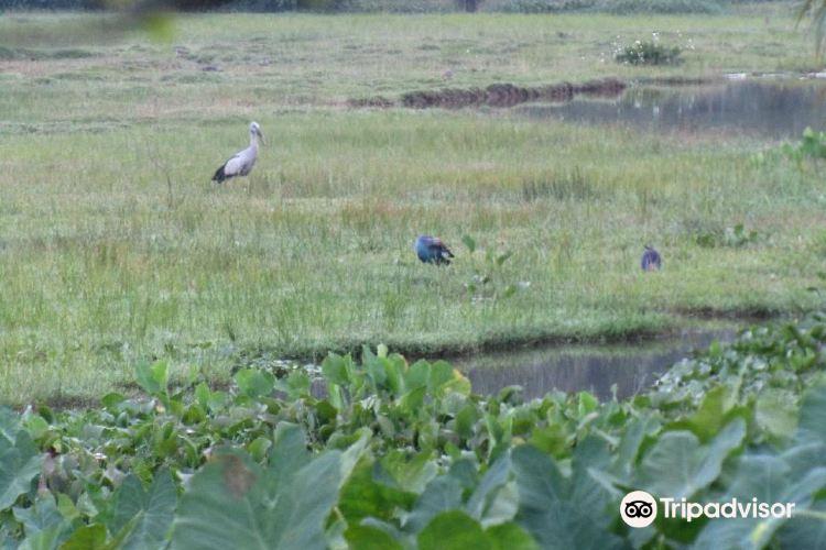 Talangama Wetland4