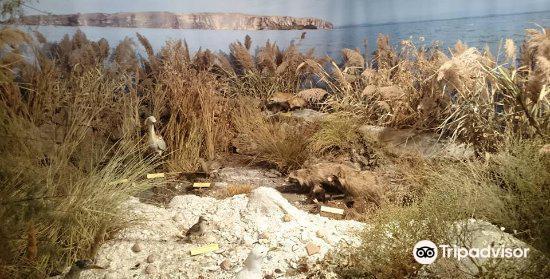 The Danube Delta Museum1