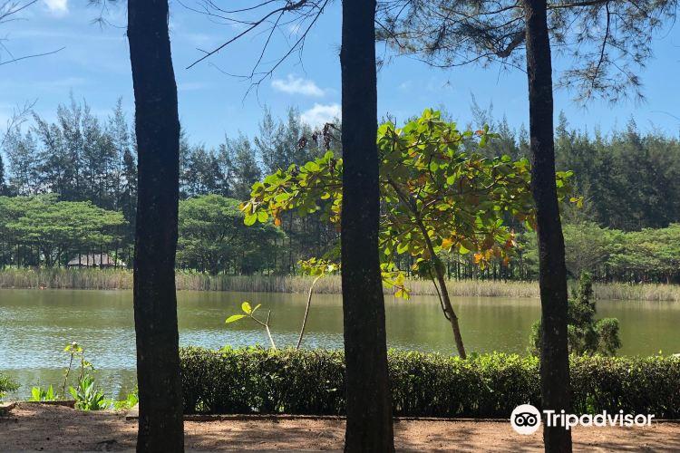 Bangka Botanical Garden (BBG)3