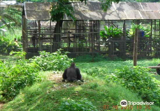 Limbe Wildlife Centre1