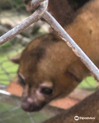 Costa Rica Animal Rescue Center3