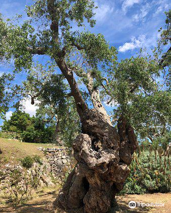 Giardino Botanico Lama degli Ulivi