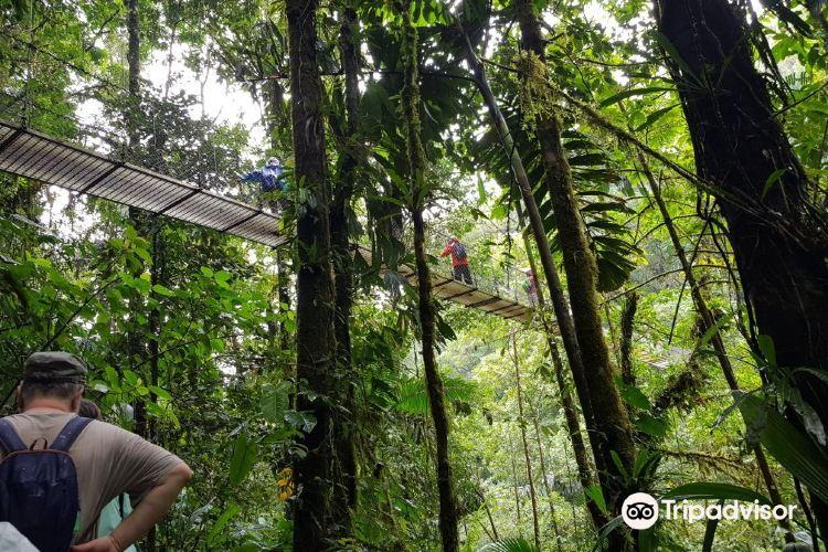 Mistico Arenal Hanging Bridges Park3