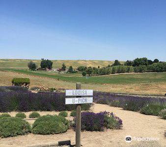 Blue Mountain Lavender Farm