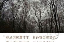 在南京,看满园樱花。