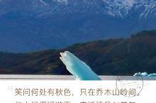 阿根廷南纬53度的莫雷诺冰川,美仑美奂