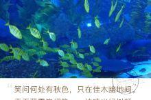 芜湖新华联大白鲸海洋公园周末亲子行
