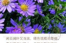 野花也灿烂 草地上开满了野花,像美丽的少女,一个个灿烂的笑脸,美丽极了! 山上的野花为谁开又为谁败