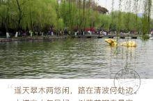 #春日寻芳#寻花问柳西子湖畔 金牛出水。 春天的西子湖畔春光明媚,柳枝抽穗,桃花艳丽,湖光山色尽在眼