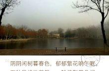 """#冬去春来,还是忘不了你—南开大学# """"渤海之滨,白河之津;汲汲骎骎,月异日新""""站在南开的大门,并没"""