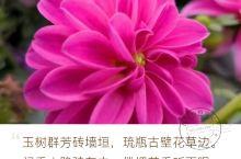 """因花而动 对于拍花 总感觉是赶鸭子上架被动而为,名花拍不到也就对公园里不知名的""""野花""""动动手,好像没"""
