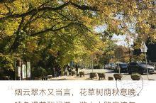 秋色无边的梵鱼寺