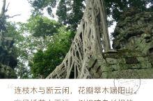 """塔普伦寺—树与庙的共生 塔普伦寺也称""""塔布笼寺"""",是一座高棉国王阇耶跋摩于1186年所建,献于其母的"""