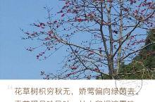 平果坡造镇踏青 2017年4月1日清明节期间,趁到坡造扫墓之际,踏青访春。坡造镇位于广西百色市平果县