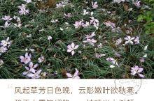 南国花萃 突然,看到相册里许多的花照,心血来潮要弄一花萃。各种叫得出名的,叫不出名的花儿,统统汇集一