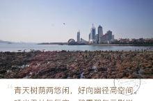 青岛——栈桥 2016年11月15日 晴好 11:55离开八大关,往栈桥景点,3393公里。 12: