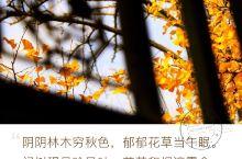 十里银杏长廊 今天安利一个小众景点,长兴县银杏长廊,这个长约12.5公里,宽在5公里道500米之间,