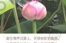 大明湖景色宜人