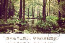 虎跑小酌 西湖什么最有名?西湖龙井!其叶呈朵,色泽光润,香气清高,滋味甘醇。配什么水最好喝?西湖龙井