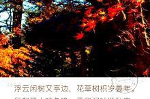 轻井泽——日本女孩最理想的结婚圣地 轻井泽——位于长野县,离东京不远,是日本的高档别墅区。更是东京人