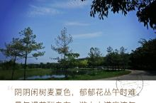 湖泉生态园的春景 弥勒是个令人颇有好感的地方,去了一次还想再去。弥勒的雄伟大佛,可邑小镇的彝族风情,