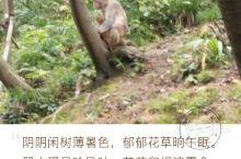 黔灵山的猴子