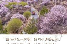 邂逅中国最美的春天!